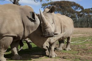Monarto Zoo - Accommodation Port Macquarie
