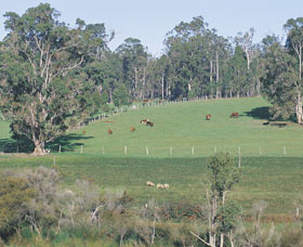 Scenic Drives - Bunbury Collie Donnybrook - Accommodation Port Macquarie